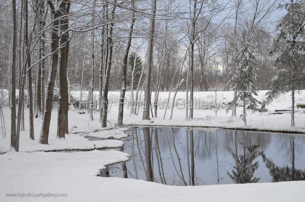 Winter Pond Forest Reflection